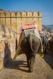 Elefantes em Amber Fort perto de Jaipur, Índia Imagem de Stock Royalty Free