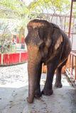 Elefantes em Ayutthaya, símbolo de Tailândia Fotos de Stock