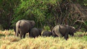 Elefantes em Maldivas vídeos de arquivo
