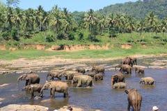 Elefantes em um lugar molhando fotografia de stock royalty free