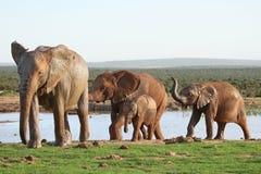 Elefantes em Waterhole imagem de stock royalty free