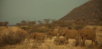 Elefantes en África Imágenes de archivo libres de regalías