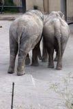 Elefantes en amor fotos de archivo