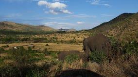Elefantes en el arbusto africano Foto de archivo libre de regalías