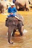 Elefantes en el campo del elefante de Maesa, Tailandia Foto de archivo libre de regalías