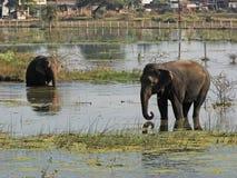 Elefantes en el lago fotografía de archivo libre de regalías