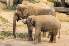 Elefantes en el parque zoológico Foto de archivo