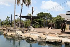 Elefantes en el parque zoológico Australia de Taronga foto de archivo