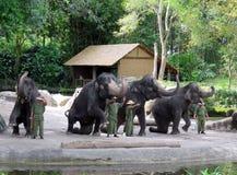 Elefantes en el parque zoológico de Singapur Imagenes de archivo