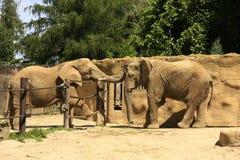 Elefantes en el PARQUE ZOOLÓGICO Imagen de archivo