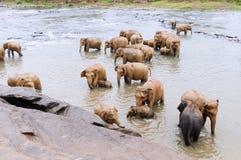 Elefantes en el río Fotografía de archivo libre de regalías