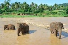 Elefantes en el río Foto de archivo libre de regalías