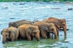 Elefantes en el río Fotos de archivo libres de regalías
