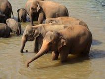 Elefantes en el río Imagen de archivo libre de regalías