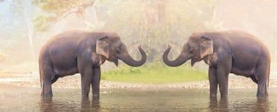 Elefantes en el río de la naturaleza en bosque profundo de la naturaleza Foto de archivo