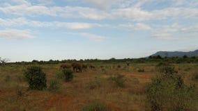 Elefantes en Kenia almacen de video