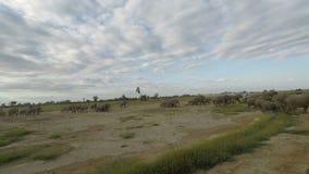 Elefantes en Kenia metrajes