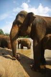 Elefantes en la batería del río foto de archivo libre de regalías