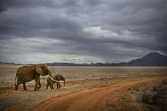 Elefantes en la sabana, la África del Este, Kenia Fotografía de archivo