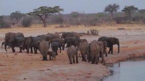Elefantes en la sabana de Zimbabwe almacen de metraje de vídeo