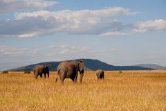 Elefantes en Masai Mara Foto de archivo libre de regalías