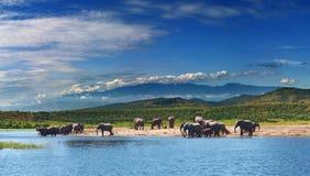 Elefantes en sabana africana Imágenes de archivo libres de regalías