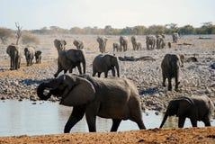 Elefantes en su manera a un waterhole Imágenes de archivo libres de regalías