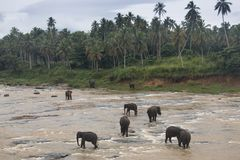 Elefantes en un orfelinato en Sri Lanka fotografía de archivo libre de regalías
