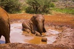 Elefantes juguetones Fotografía de archivo