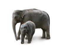Elefantes - madre y bebé, en parque zoológico Foto de archivo