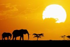 Elefantes mostrados em silhueta no por do sol Imagens de Stock Royalty Free
