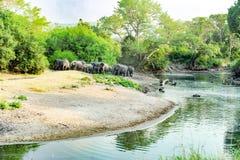 Elefantes na paisagem bonita com o rio em Serengeti, África, hundrets dos gnu junto Imagens de Stock Royalty Free