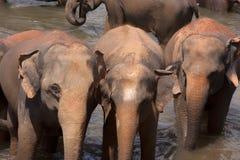 Elefantes no furo molhando Foto de Stock