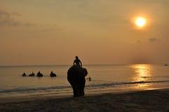 Elefantes no mar Fotografia de Stock Royalty Free