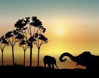 Elefantes no nascer do sol Foto de Stock Royalty Free