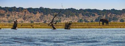 Elefantes no parque natural de Chobe em Botswana, África foto de stock