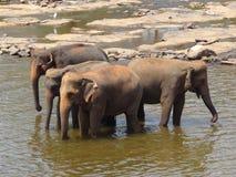 Elefantes no rio Imagem de Stock Royalty Free