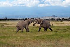 Elefantes no savana Imagem de Stock