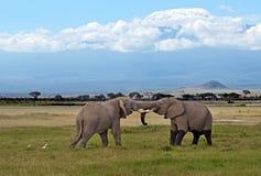 Elefantes no savana Fotografia de Stock