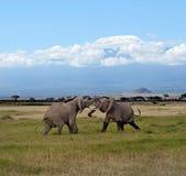 Elefantes no savana Fotografia de Stock Royalty Free
