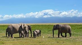 Elefantes no savana Foto de Stock