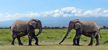Elefantes no savana Imagem de Stock Royalty Free