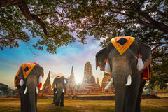 Elefantes no templo de Wat Chaiwatthanaram no parque histórico de Ayuthaya, um local do patrimônio mundial do UNESCO, Tailândia
