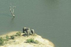Elefantes por el lago Imagen de archivo libre de regalías