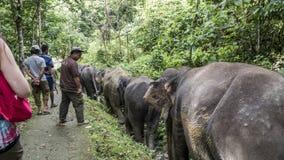 Elefantes que caminan abajo de la trayectoria de la selva Imágenes de archivo libres de regalías