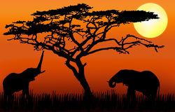 Elefantes que comen en puesta del sol stock de ilustración