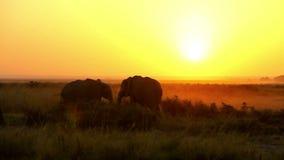 Elefantes que comen la hierba en el parque de Amboseli, Kenia metrajes