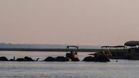Elefantes que cruzan el río de Chobe en el parque nacional de Chobe, Botswana imagenes de archivo
