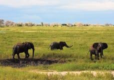 Elefantes que juegan en el agujero del fango Fotografía de archivo