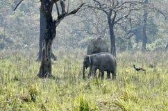 Elefantes que pastan en un parque fotografía de archivo